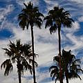 Crazy Cloud Palms by Ross Jamison