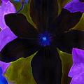 Crazy Exposure Clematis by Ann Michelle Swadener