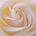 Creamy Swirl by Irina Davis