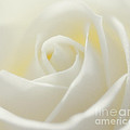 Creamy White by LHJB Photography