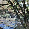 Creek 2 by Michael Rushing