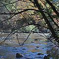 Creek 3 by Michael Rushing
