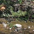 Creek 5 by Michael Rushing