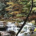 Creek 8 by Michael Rushing