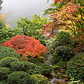 Creek At Japanese Garden In The Fall by Jit Lim