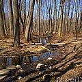 Creek At Woodland Park by Linda Waidelich