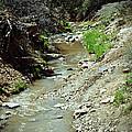 Creek by Chelsea Mollak