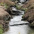 Creek In Alabama by Mary Koval