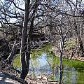 Creek In North Texas by Amy Hosp