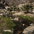 Creek In Palm Canyon 2 by Lee Kirchhevel