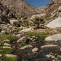 Creek In Palm Canyon by Lee Kirchhevel