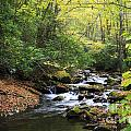 Creek In The Woods by Jill Lang