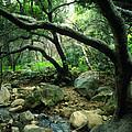 Creek In Woods by Kathy Yates