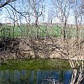 Creek Recovering From Winter by Amy Hosp