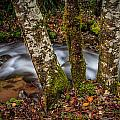 Creek With Trees by Mike Penney