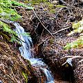 Creeks Fall by Brent Dolliver