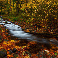 Creekside Colors by Darren  White