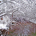Creekside In The Snow 2 by Duane McCullough