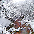 Creekside In The Snow 3 by Duane McCullough