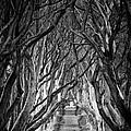 Creepy Dark Hedges by Nigel R Bell