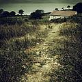 Creepy Trail by Carlos Caetano