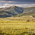 Crested Butte Ranch by Timothy Hacker