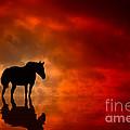 Crimson by Bahadir Yeniceri