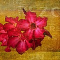 Crimson Floral Textured by Alice Gipson