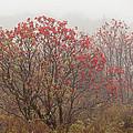 Crimson Fog by Melinda Ledsome