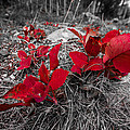 Crimson Foliage by Gina Herbert