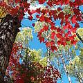 Crimson Foliage by James Peterson
