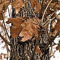 Crispy Leaves by SC Pierce