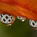 Criss Cross Water Drop by Crystal Wightman