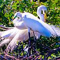 Criss-cross Egrets by Susan Molnar