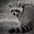 Critter Corner by Kim Henderson