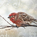 Croching Finch by Debbie Portwood