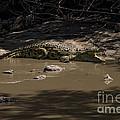 Crocodile   #7282 by J L Woody Wooden