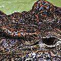 Crocodile Eye by Joel De la torre