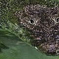 Crocodile by Joel De la torre