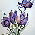 Crocus In April by Mindy Newman