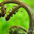 Crooked Fern by Ben Baucum