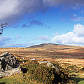 Crooked Tree At Feather Tor, Staple by Panoramic Images