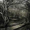 Crooked Tree Enchanted Path by Robert Gardner