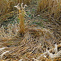 Crop Circle Spiral by Denise Mazzocco