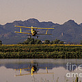 Crop Duster Applying Seed To Rice Field by Ron Sanford