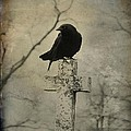 Crow On A Crooked Old Cross by Gothicrow Images