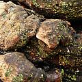 Crotchety Old Moss Covered Tree Man by Chris Sotiriadis
