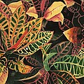 Croton Leaves by Judy Swerlick