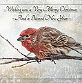 Crouching Finch Christmas Greeting Card by Debbie Portwood