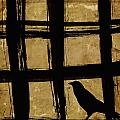 Crow And Golden Light Number 2 by Carol Leigh